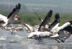 70% видів птахів в Туреччині може зникнути