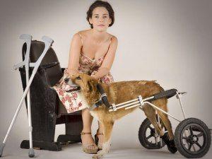 Фотовиставка допоможе покаліченим тваринам