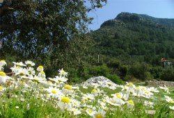 Гірські луки анталії будуть відкриті для туристів