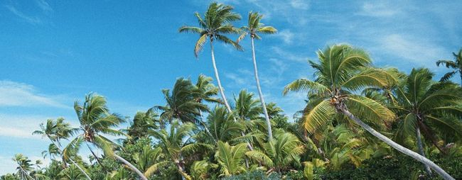 Екскурсії на острови поруч з паттайя, тайланд: фото і відео. Коралові острова: відгуки. Острови мавп. »Карта мандрівника