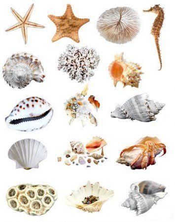 Класифікація тварин за палеонтології