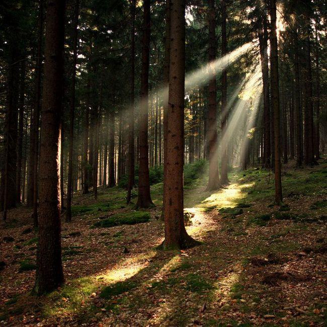 Національний парк шумава