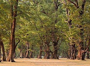 Національний парк сірінат на пхукеті