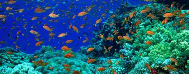 Риби в червоному морі в шарм-ель-шейху, єгипет: небезпечні риби, каталог, фото, види отруйних риб »карта мандрівника